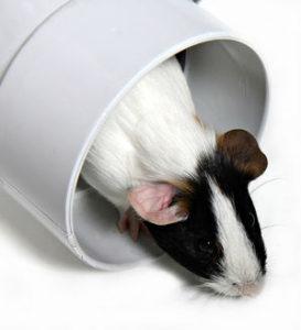 mouse_tunnelx300
