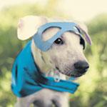 The Pet Issue '19: Pet Plans